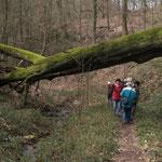 Faszination Altholz im Hellenbachtal