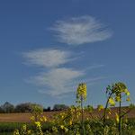 Cirrus oder Federwolken sind Eiswolken in großer Höhe - Bild: Ingo P.