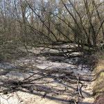 Amphibische Landschaften: Feucht - Bild: Ingo Pedal