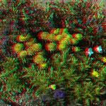 Am Treffpunkt:  Blumen in Trögen, für alle die das mögen
