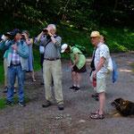 Beobachter: War's eine junge Singdrossel?  Foto am 15.06.2017 von Peter Welker