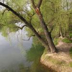Pfade, nah am Wasser - Foto Ingo Pedal