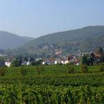 Sonne - Wein - Pfalz! - Foto P. Welker