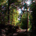 Der Wald - in echt noch viel schöner!
