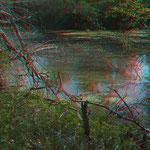 Biotop für Amphibien - man hört es am Frosch-Konzert   © P. W.
