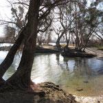 Amphibische Landschaften: überflutet - Bild: Ingo Pedal