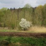 Erste Blüten und Knospen im abwechslungsreichen Kraichgau