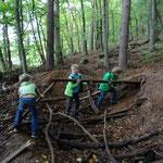 Baumaterial Holz sammeln