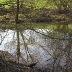 """Teich """"Hummelberg"""" im Tälchen - Foto: Ingo Pedal"""