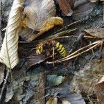 Gefährliches Insekt gefunden...