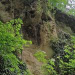 Lößwand in der Galgenhohl  (Foto Roland Merger)