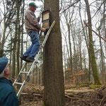 Wackeliger Aufstieg: Fledermauskästen müssen hoch hängen...