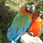 Parc animalier et exotique Zoa Sanary sur Mer