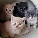 Graf Urmel, Gordon, Gismo und Garfield