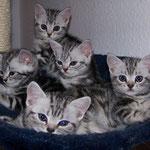 Charly, Chicco, Celia, Cheyenne & Coco