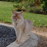 Fawn Silver - Frimousse de la Cornaline