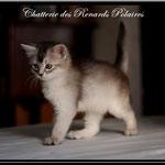 Chaton Black Silver