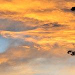 2013 3月 多摩湖周辺 夕焼け
