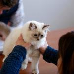 Geschafft: Ich bin jetzt Kittenchampion!