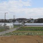境川両側には畑とハウスが多い