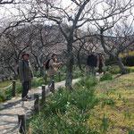 散策路を梅を見ながら上る
