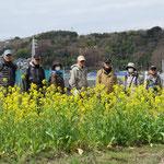 別邸庭園を出て菜の花が咲く農道を俣野園へ向かう