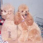 Knickerbocker's Barney und Derrick vom Kristallcolor Vater und Sohn