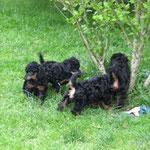 unsere Hunde im Garten