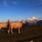 Sommer Grossarltal Salzburger Land