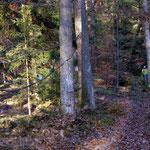 Freundschaftsbaum Friedwald Naturbestattung