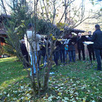 Naturbestattung Friedwald