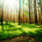 Waldbestattung