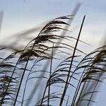 Windbestattung