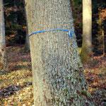 Naturbestattung Familienbaum Freundschaftsbaum