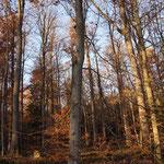 Friedwald Naturbestattung