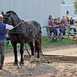 Mit dem Pferd um die Welt - Jan stellt uns das Kaltblut vor