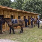 Vorbereiten der Pferde für den Reiterpass