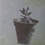 Kleine Pflanze, 1993, Öl/LW, 60 x 70 cm, Privatbesitz