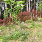桜葬地もあざみとすみれで彩られます。