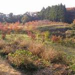 紅葉の樹木葬地