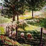 Sauvagnas : les moutons d'Annie