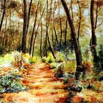 Capbreton : la forêt