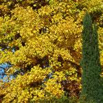 Ein gelber Farbenrausch