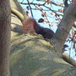Ein Eichhörnchen schaut neugierig