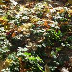 Malerischer Waldboden
