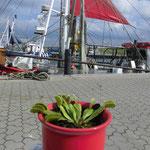 Dornumer Siel Hafen
