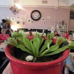 Bewitched Café - vorher Cakes 'n' Treats Dortmund