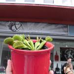 Veggilicious Shop Dortmund