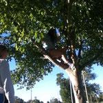 Jenna im Baum
