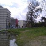 Habitat Participatif - Petit Bois - Les Chalets - Jardin public - Noue